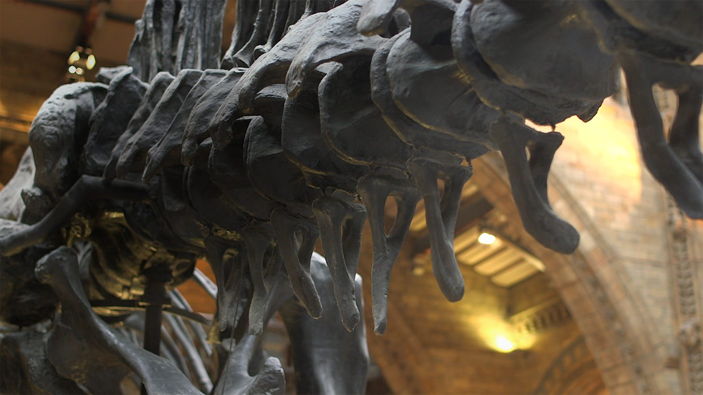 Close up of the bones of Dippy the Diplodocus on display at the Natural History Museum