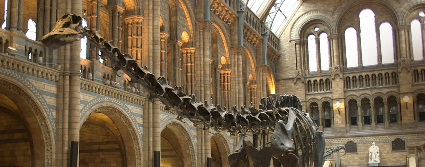 A wide angle view of Dippy the Diplodocus' neck and bone structure
