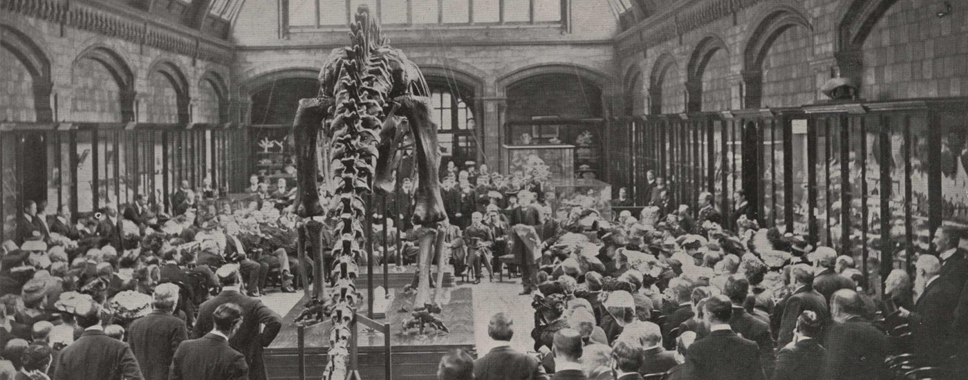 A black and white photograph of busy crowds seeing Dippy the Diplodocus on display for the first time in 1905
