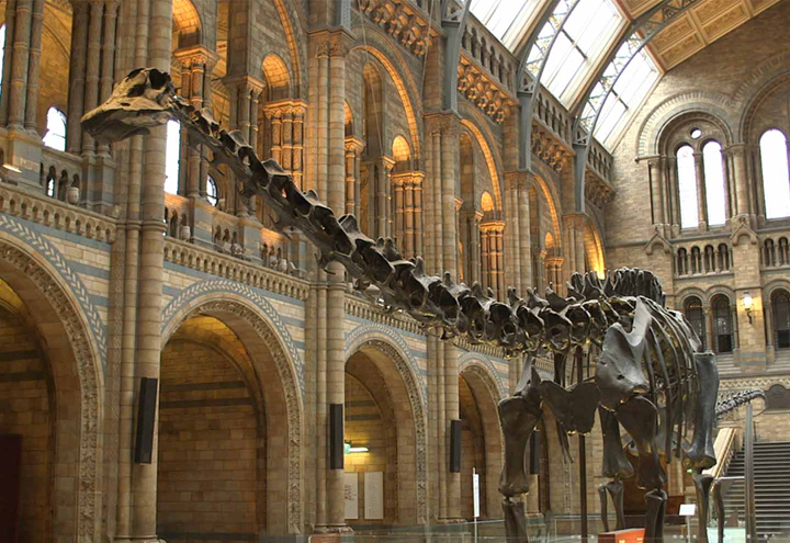 Dippy the Diplodocus on display at the Natural History Museum