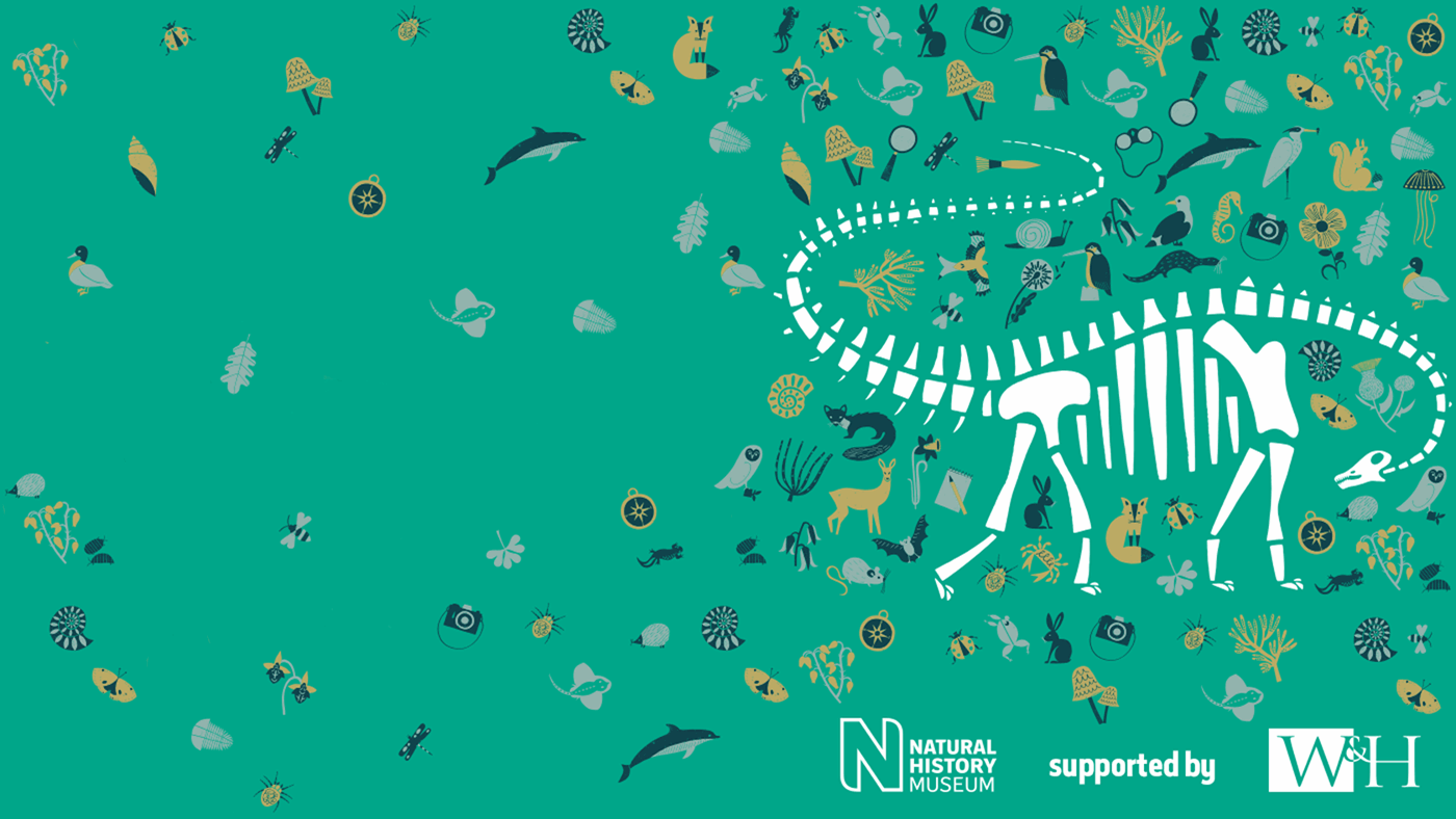 An illustration of Dippy the Diplodocus surrounded by creatures often found in Natural History Museum collections