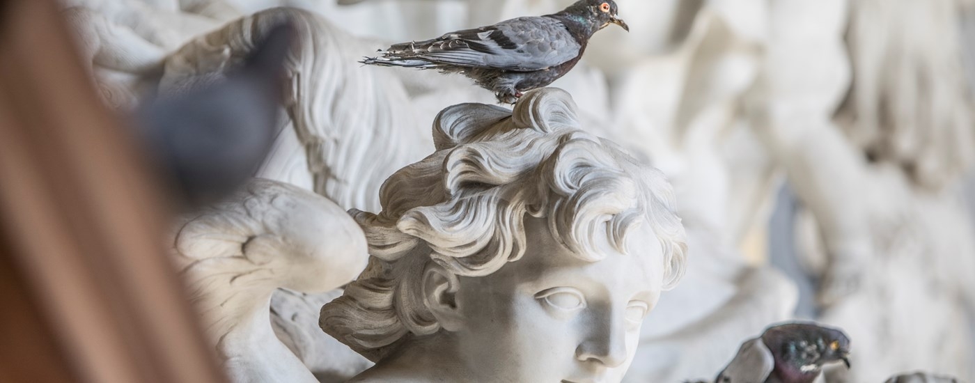Image of pigeon, part of Cattelan's 'Others' sculpture featuring 200 pigeons